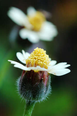 Two small flowers like lovers show in picture