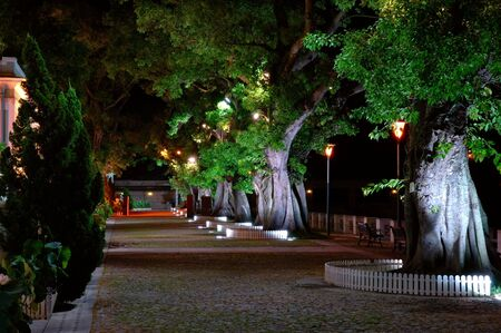 The night scene, growing trees beside a street Stock Photo - 1778086