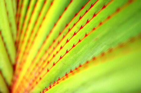 agave: El patr�n de agave con hojas polla