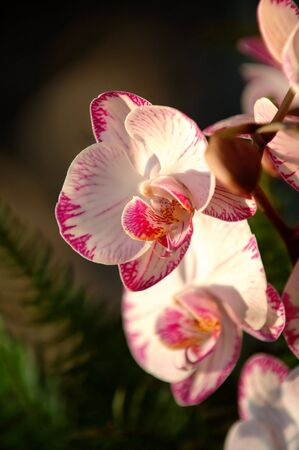 A close up shot of white orchid Stock Photo - 2009471