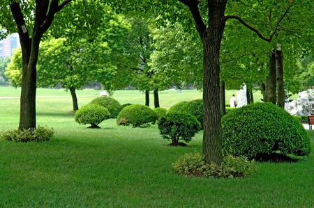tropical evergreen forest: The panorama of trees and manicured plants in city park