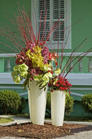 The horticulture, two pots of flowers located in the garden photo
