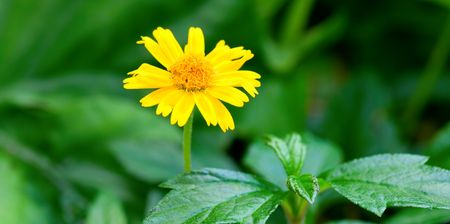 floret: The closeup view of yellow floret over green Stock Photo
