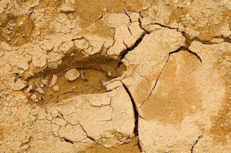 Close up view of foot print on dried and cracked soil Stock Photo - 3870115