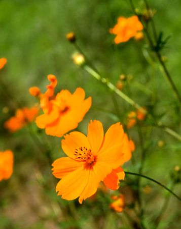 floret: The closeup view of orange floret over green Stock Photo