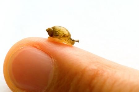 finger tip: A small snail moving over finger tip