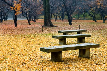 The view of seat with fallen leafs in garden photo