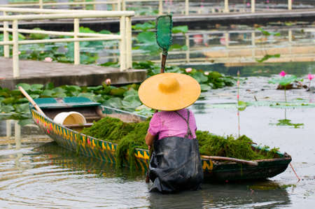A woman with hat working in lotus pool Stock Photo - 8038527