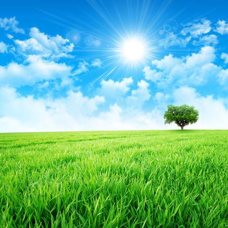 태양에서 초원처럼 녹색. 녹색 잔디 필드에 구름을 뚫고 강렬한 태양 스톡 콘텐츠