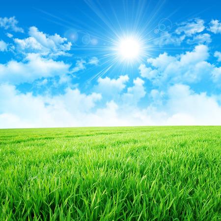 Verde como um prado no sol. Sol intenso quebra através das nuvens sobre um campo de grama verde