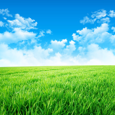 good weather: Green like a meadow in the sun. Fresh green grass under a beautiful blue sky with white clouds Stock Photo