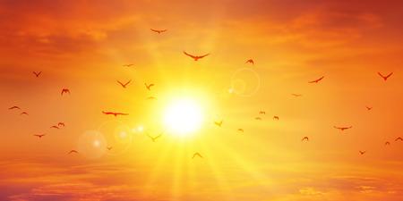 파노라마 따뜻한 일몰입니다. 조류는 앞서 석양을 비행합니다. 높은 해상도 하늘 배경