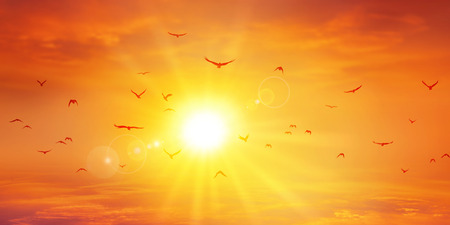 Panoramic warme zonsondergang. Vogels vlucht vooruit van de ondergaande zon. Hoge resolutie hemel achtergrond
