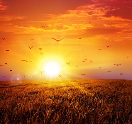 rising dead: Warm sunset on the wild meadow. Intense sun setting down on a peaceful grass field with a flight of birds