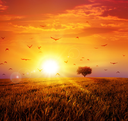 Warm sunset on the wild meadow. Intense sun setting down on a peaceful grass field with a flight of birds