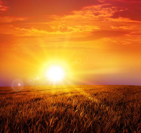 Puesta del sol caliente en la salvaje pradera. Ajuste intenso sol abajo en un campo de hierba pacífico Foto de archivo