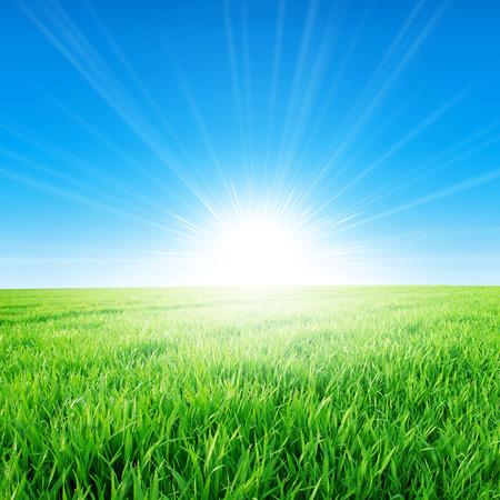 朝の太陽の下でスプリング フィールド。昇る太陽の下でゆっくりと成長して緑の草の新鮮なフィールド