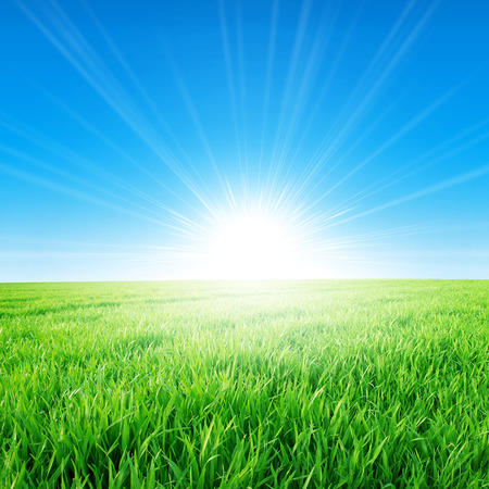 Spring field under the morning sun. Fresh field of green grass growing slowly under the rising sun 스톡 콘텐츠