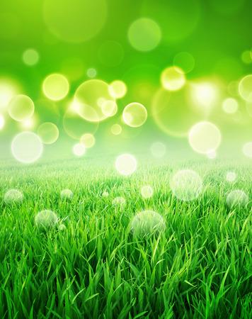 buen vivir: Sensación verde. Resumen de fondo de un campo de hierba de crecimiento lento