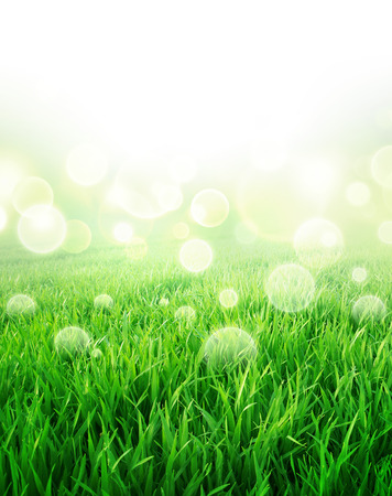 sensation: Green sensation. Abstract background of a grass field slowly growing Stock Photo