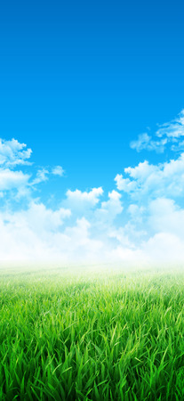environmental: Green sensation. Abstract background of a grass field slowly growing under the blue sky