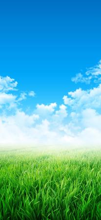 rising of sun: Sensación verde. Resumen de fondo de un campo de hierba que crece lentamente bajo el cielo azul