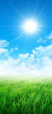 sensation: Green sensation. Abstract background of a grass field slowly growing under the sunlight