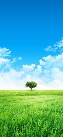 despacio: Campo fresco de la hierba verde que crece lentamente bajo el sol naciente