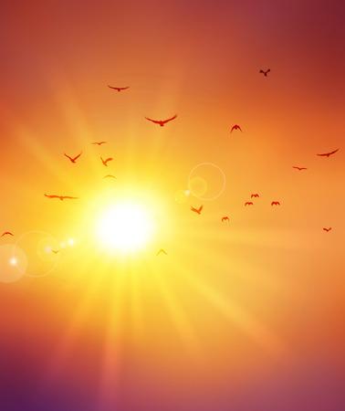 the setting sun: Birds flight ahead the setting sun
