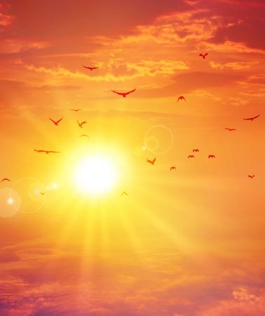 Birds flight ahead the setting sun in a cloudy sky background