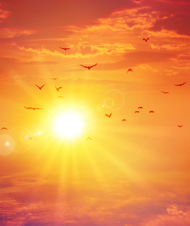 sonne: Vögel Flug vor der untergehenden Sonne in einem bewölkten Himmel Hintergrund