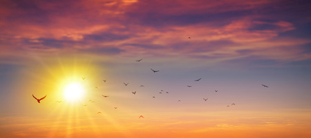 radiant light: Birds flight in a high resolution summer sun background