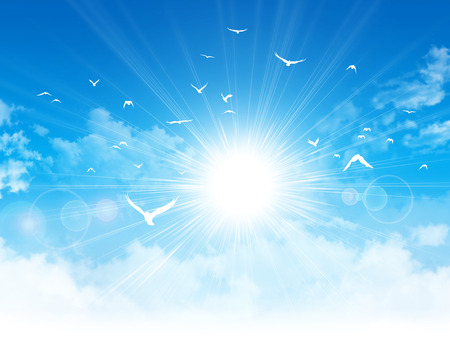 White birds flight in front of the sunshine in a cloudy blue sky