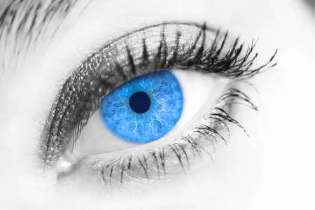 close up eye: portrait of a beautiful female blue eye