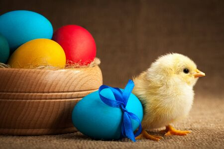 easter chick: small chick with easter eggs Stock Photo
