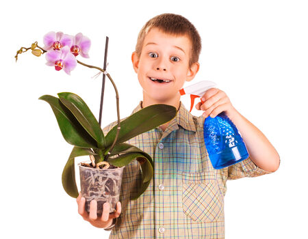 little boy is caring for flowers Stock Photo