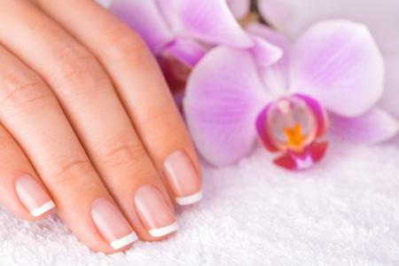 french manicure: beautiful manicure on white