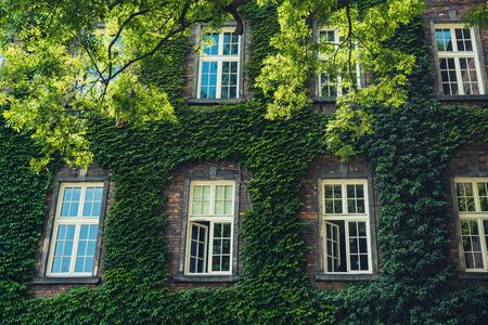 Vintage windows on a brick house covered with greenery Stok Fotoğraf