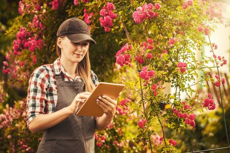 woman agronomist makes quality control breeding of new varieties of roses
