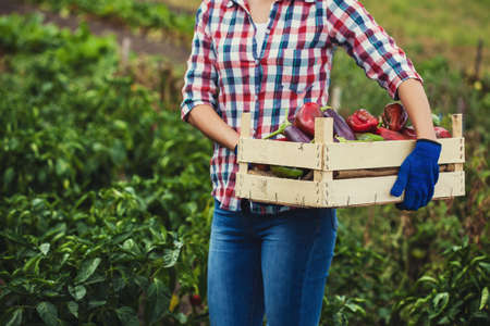 woman farmer harvests pepper and eggplant in the vegetable garden.