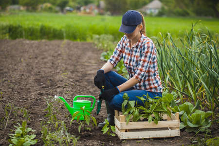 farmer girl with a box of seedlings at work in the vegetable garden