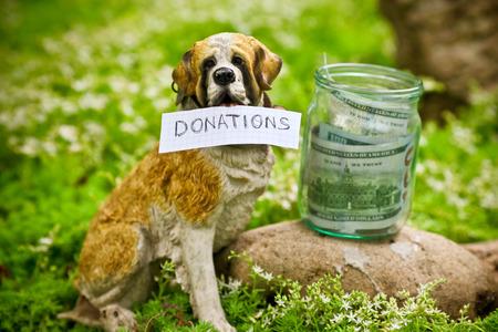 perro asustado: El perro recaudar fondos para las donaciones