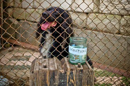 give money: poor dog waiting people give money on yard Stock Photo