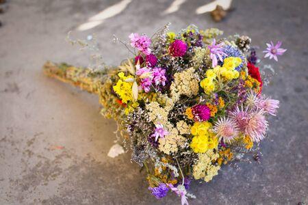 wild marjoram: beautiful wild flowers