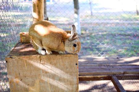 rabbit cage: wild fluffy rabbit at cage at zoo Archivio Fotografico
