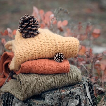 highboy: Winter warm clothes in the wood on a stub. Stock Photo