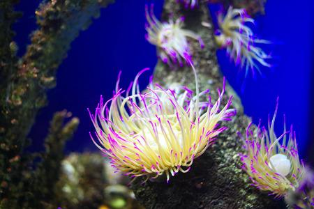 Exotic aquarium Imagens