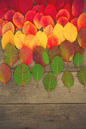 Autumn leaves , Autumn background, Colors of Fall on a wooden background
