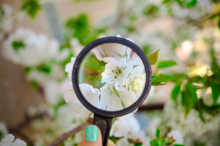 Magnifying glass directionally on spring flowers of a tree. Concept of spring.