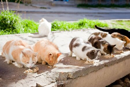 Group homeless cats eat food on the street